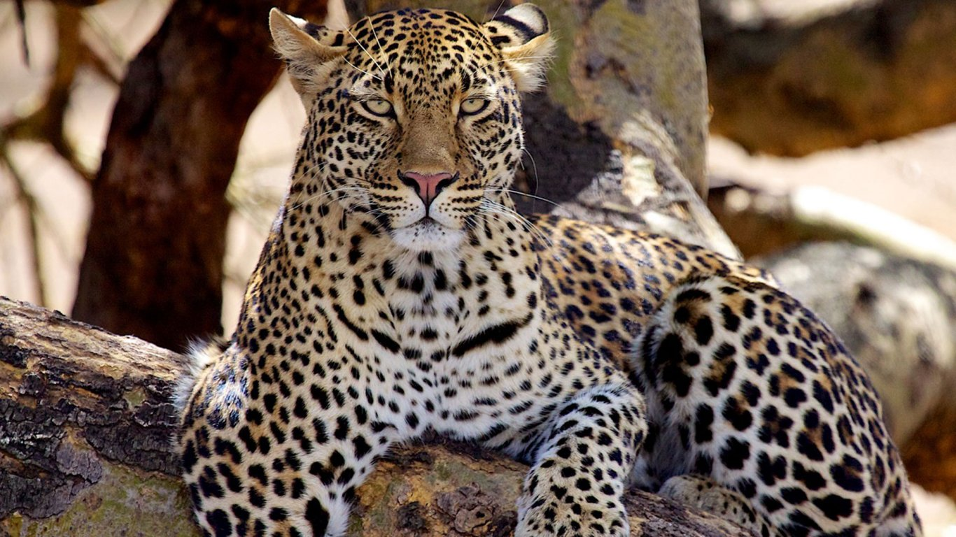 4 DAY TANZANIA UNFORGETTABLE SAFARI EXPERIENCE