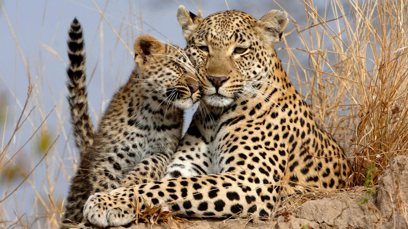 9 Day Tanzania Adventure Big Cats Safari