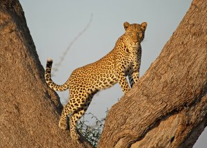 11 Day Serengeti Tented Camps Safari and Zanzibar