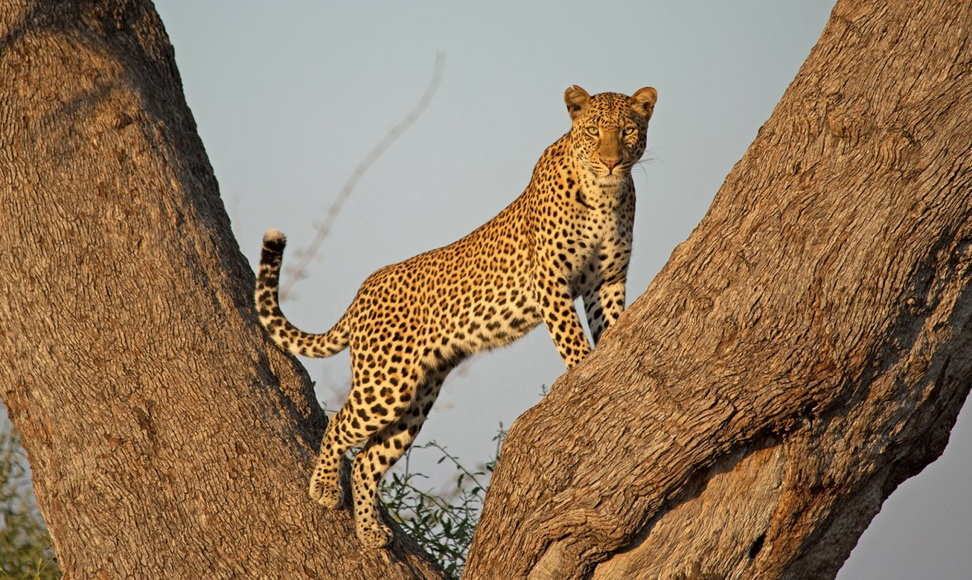 11 Day Serengeti Tented Camps Safari and Zanzibar