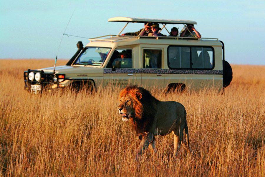 Safari+Zanzibar