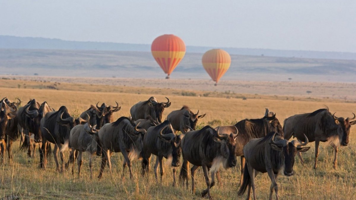 4 DAY SERENGETI WILDEBEEST MIGRATION TRACKING SAFARI