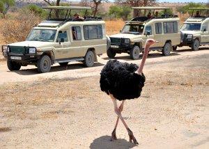 8 DAY TANZANIA CULTURAL TOURISM AND GAME SAFARI