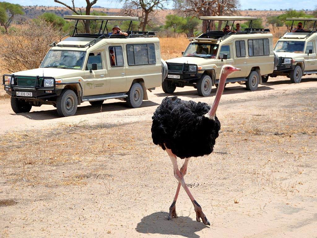8 DAY TANZANIA CULTURAL TOURISM AND GAME SAFARI