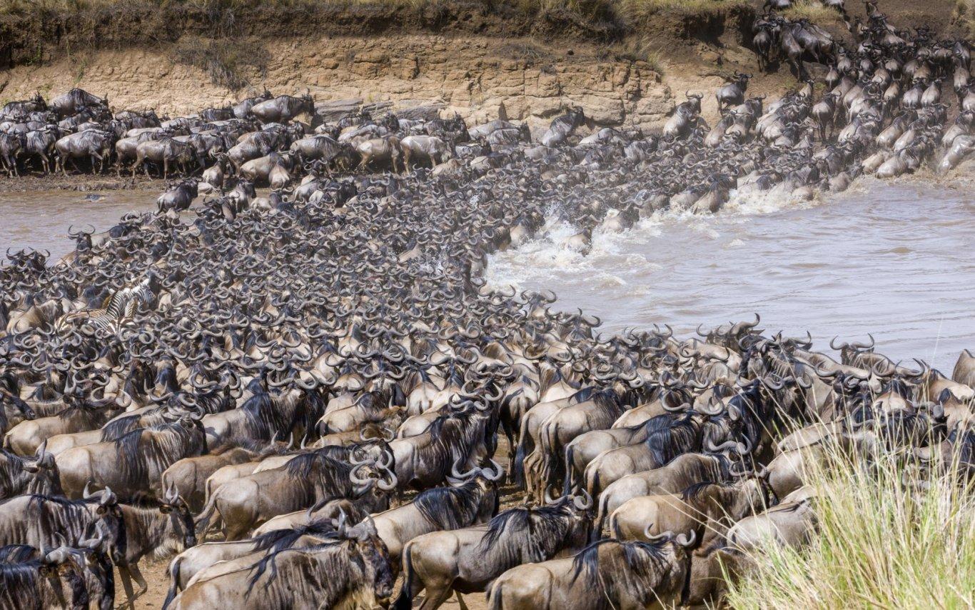 9 Day Serengeti Wildebeest Migration Tracking Safari