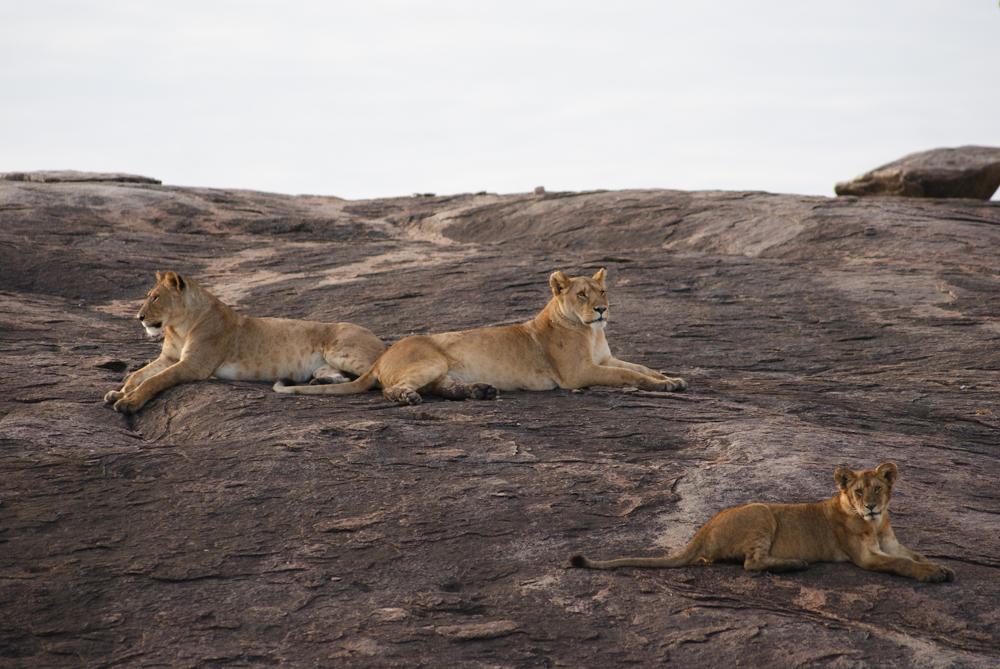 12 Day Best of Serengeti Big Cats Safari