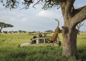 8 DAY TANZANIA BUDGET SAFARI AND CULTURAL TOURISM