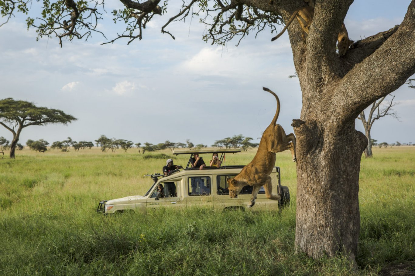 8 DAY TANZANIA BUDGET SAFARI AND CULTURAL TOURISM