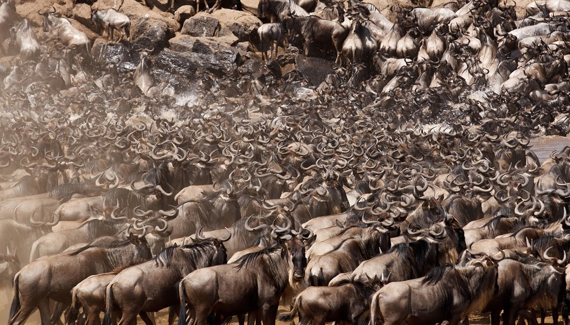 11 DAY SERENGETI WILDEBEEST MIGRATION TRACKING SAFARI