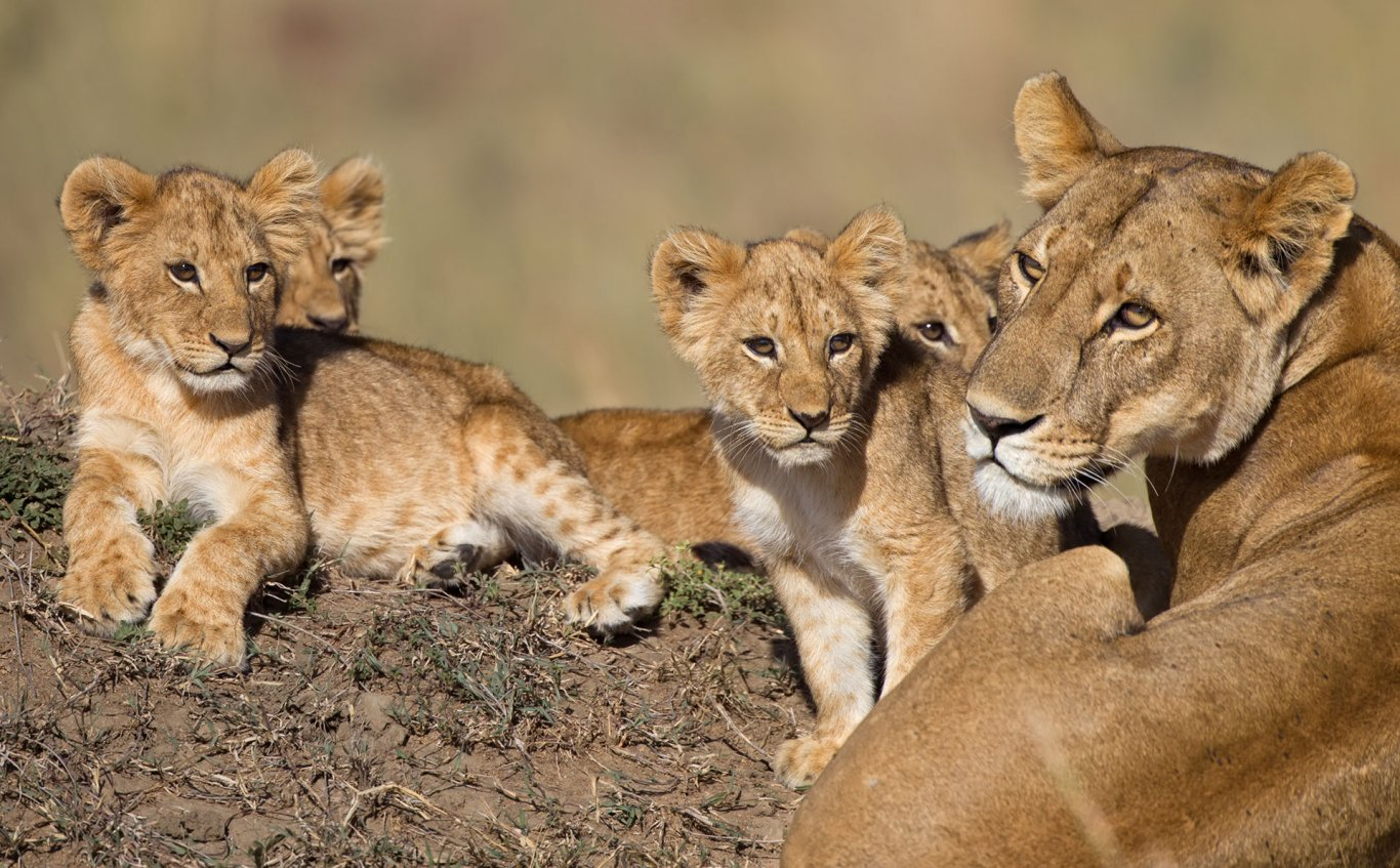 3 DAY ADVENTURE TENTED CAMP SAFARI TO MASAI MARA