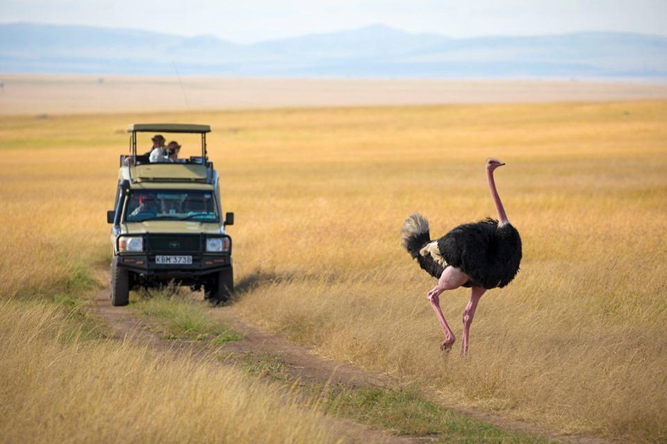 6 DAY SAFARI TO LAKE NAKURU AND MASAI MARA